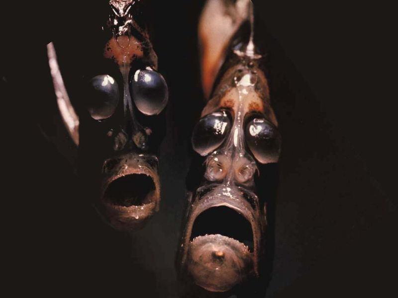 Bizarre Ocean Creatures