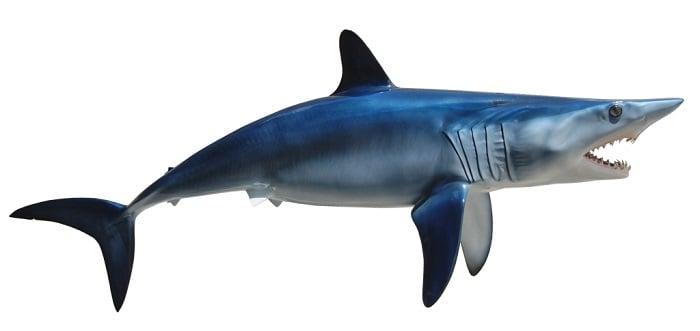 Coolest Sharks Mako