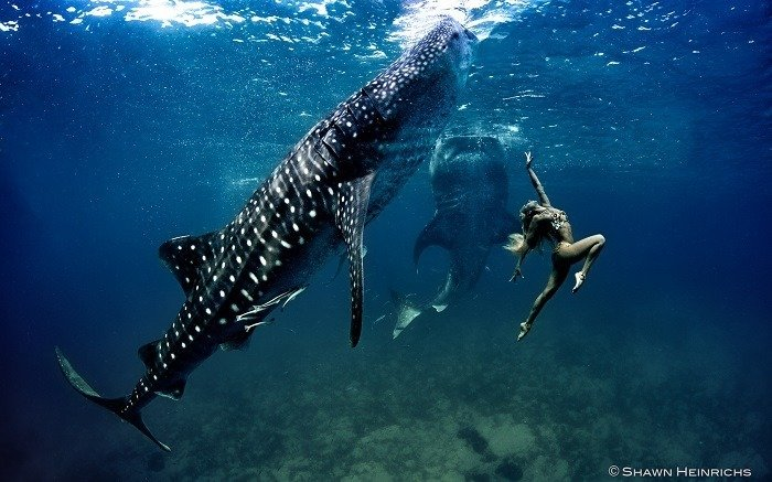 Coolest Sharks Whale Shark Fashion