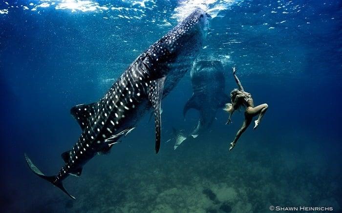 Coolest Sharks Whale Shark Fashion