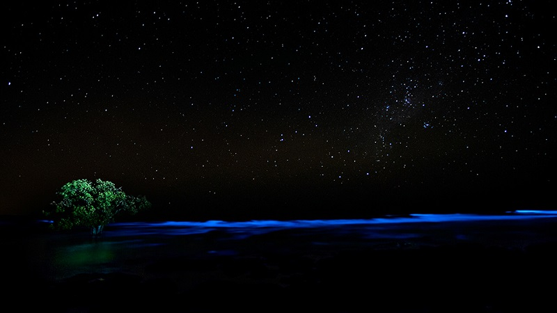 Lone Tree Bioluminescence
