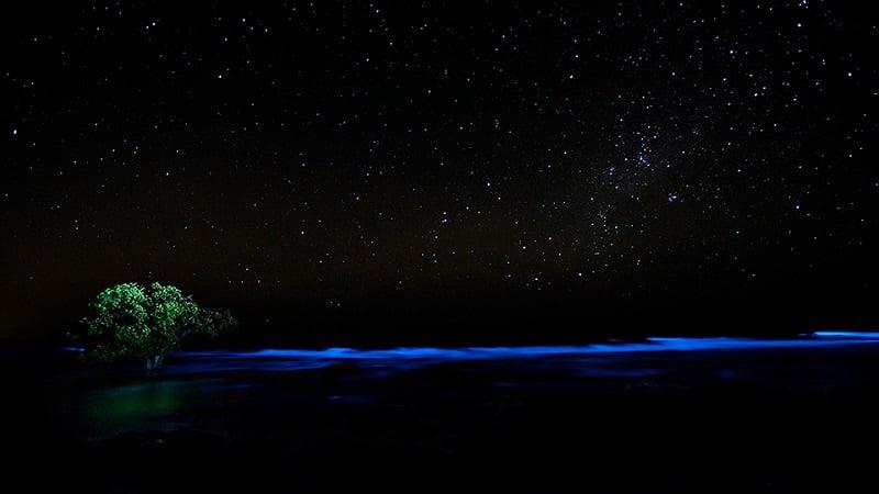 Lone Tree Bioluminescence