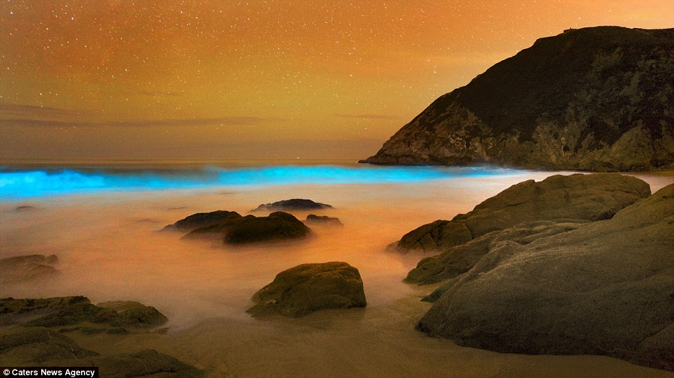 Bioluminescent Glow