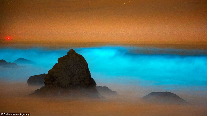 Red Tide Blue Bioluminescence