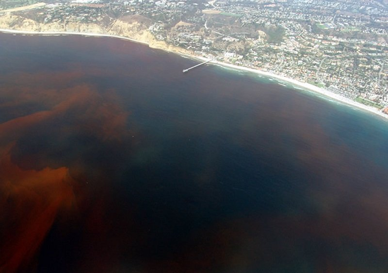Red Tide In California