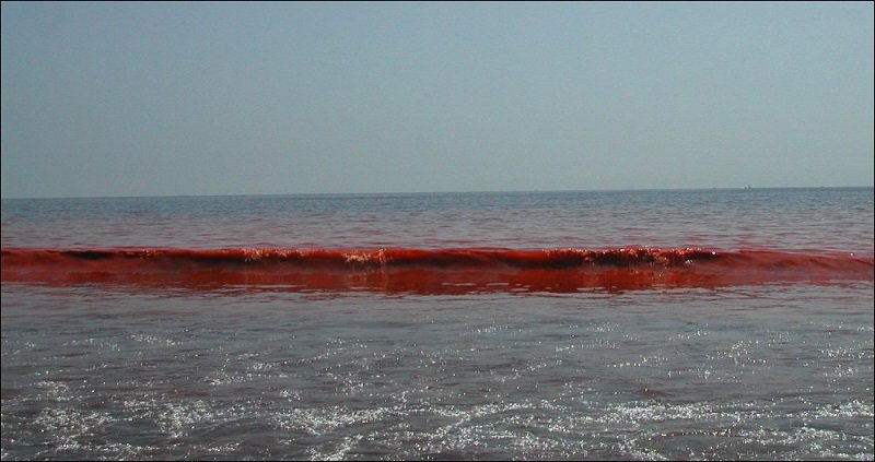 Red Tide Waves