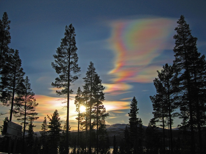 Nacreous Clouds Over Forest