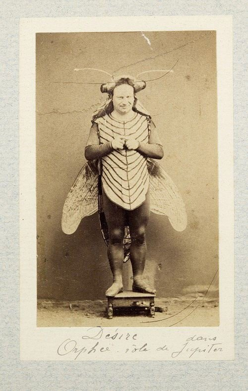 Butterfly Weird Halloween Costume