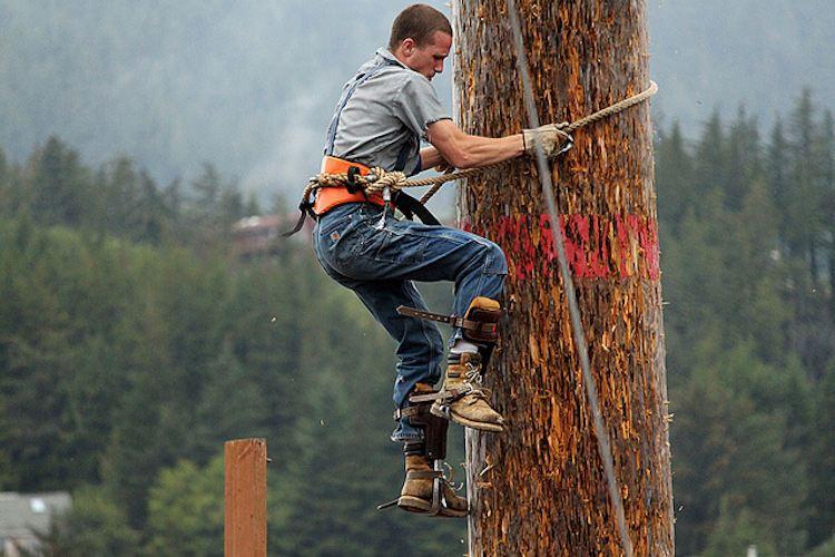 Lumberjack Job