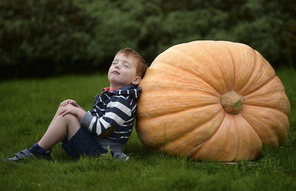 Fall Photos Pumpkin