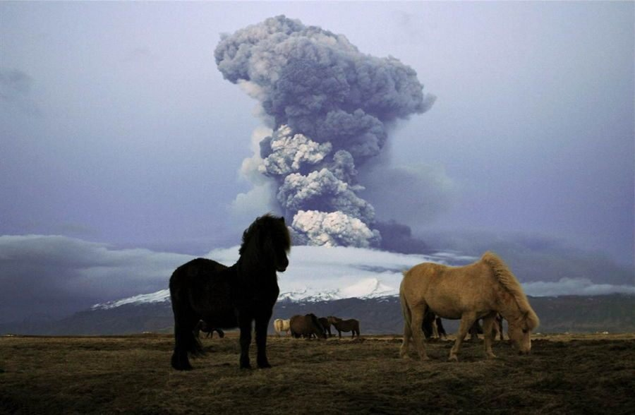 Ponies In Front Of A Volcano