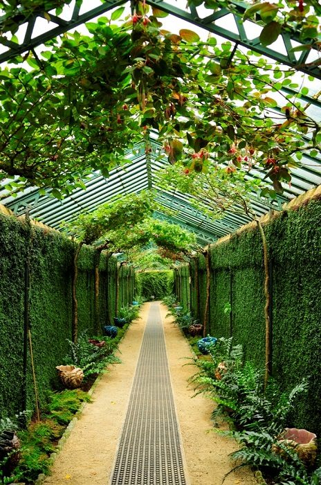 Royal Greenhouses Of Brussels
