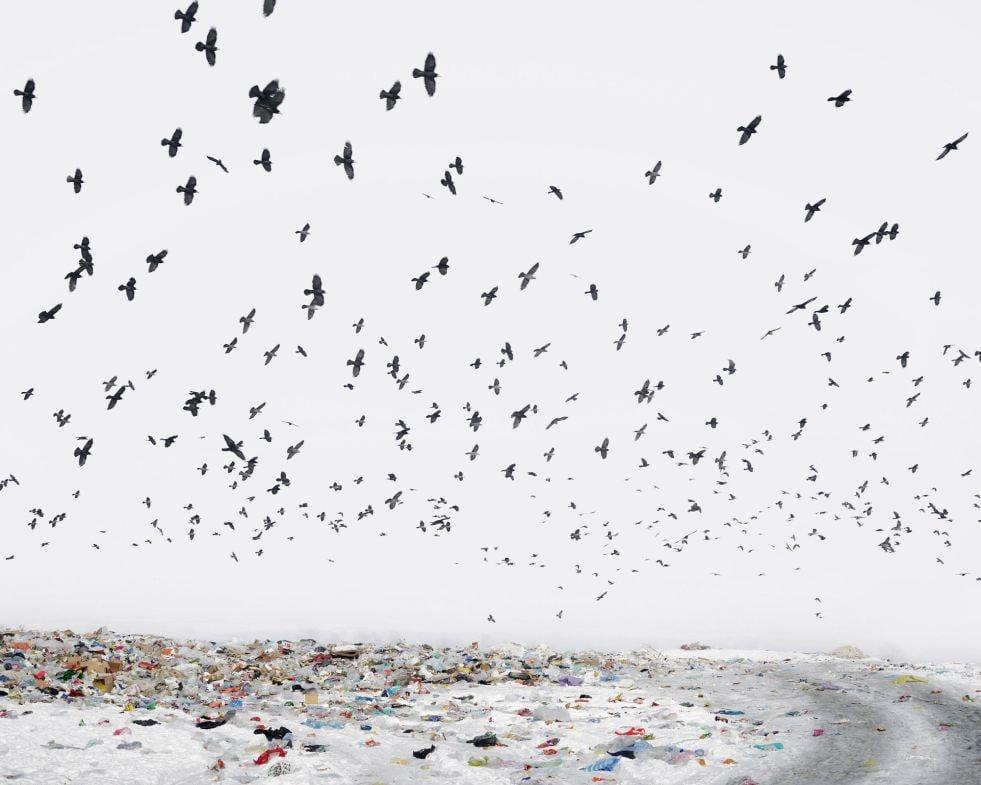 Romania Birds