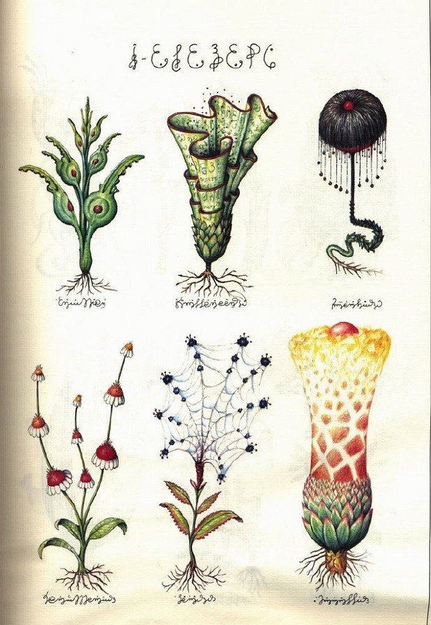 Codex Seraphinianus Botanical Features