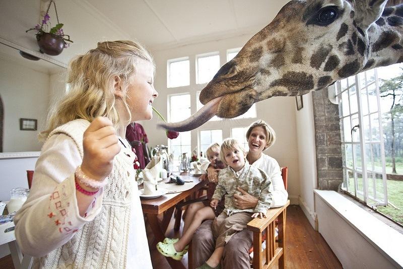 Eating Giraffes Kid