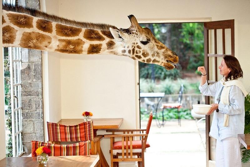 Eating Giraffes Person