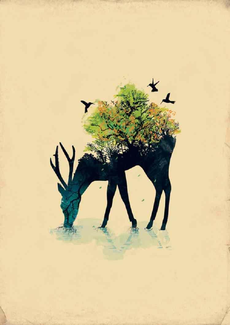 Incredible Illustrators Kwan Deer