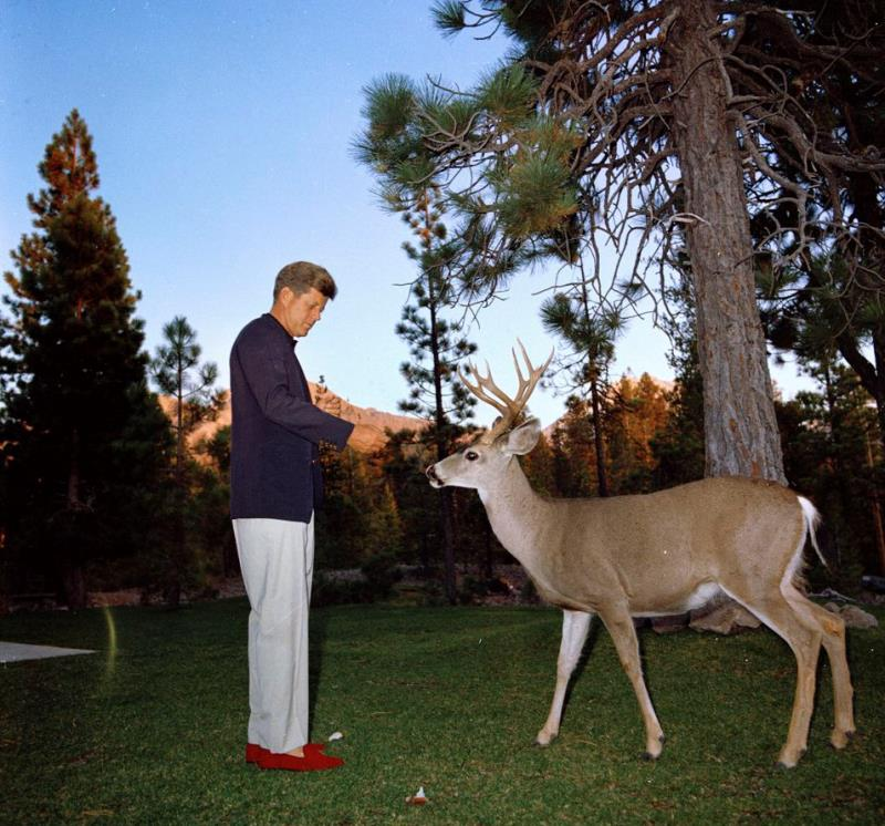 John Kennedy Photos Feeding A Deer