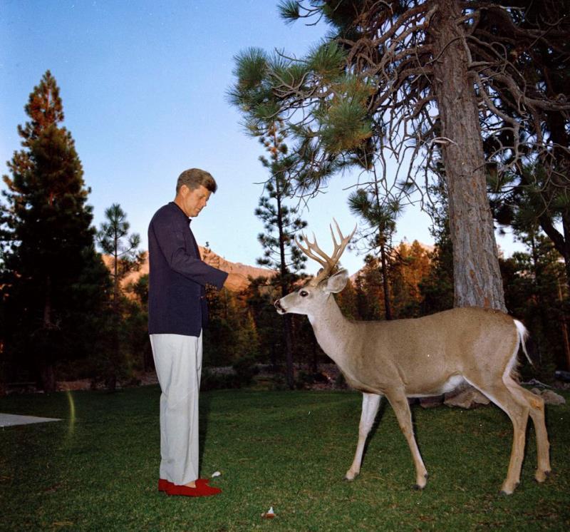 John Kennedy Photos Feeding A Deer