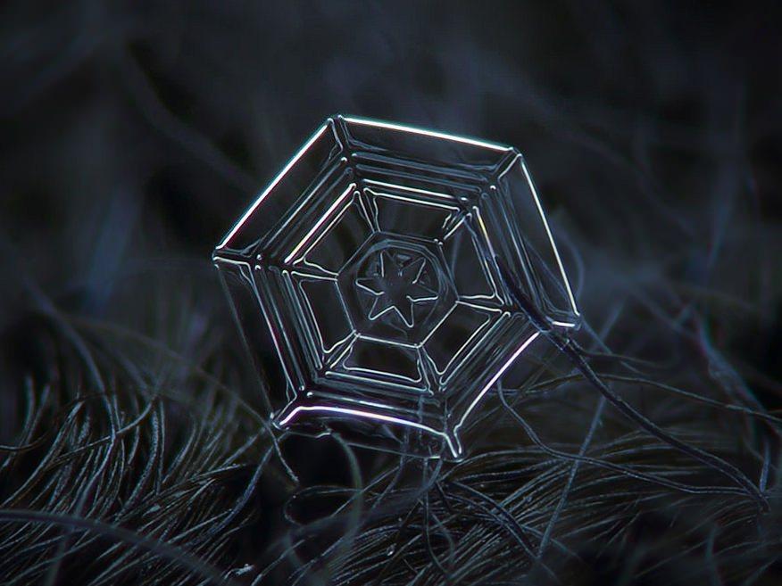 Macro Snowflakes Web