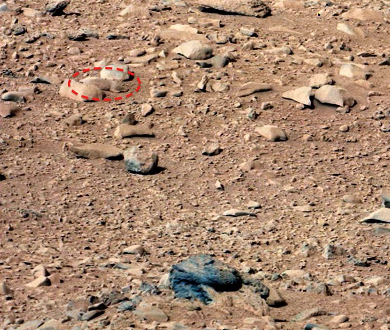 Mars Landscape Rodent