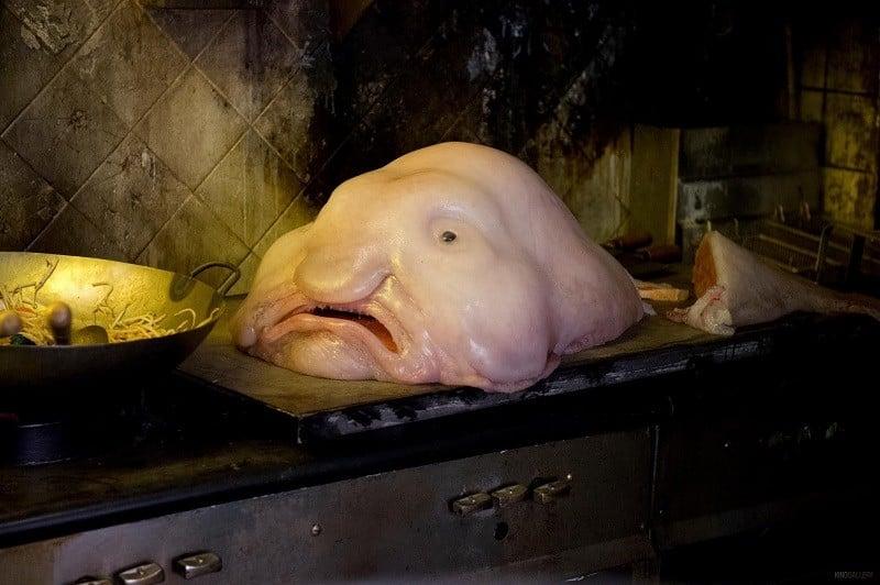 Ugliest Animals Dead Blobfish
