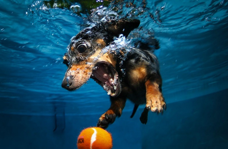 Underwater Photos Dog