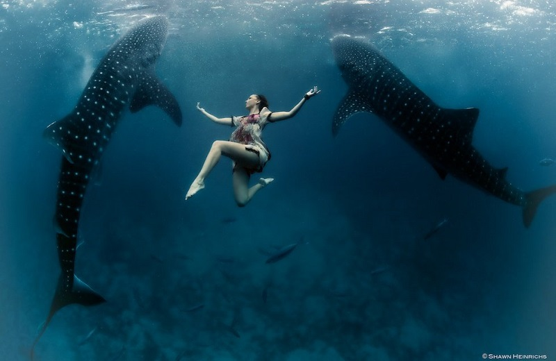 Underwater Photos Whale Shark
