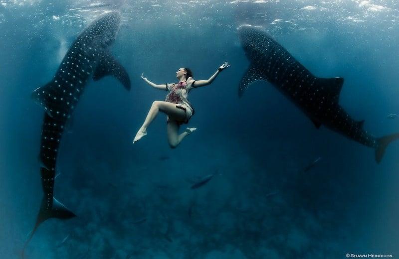 20 Underwater Photos That Will Blow Your Mind