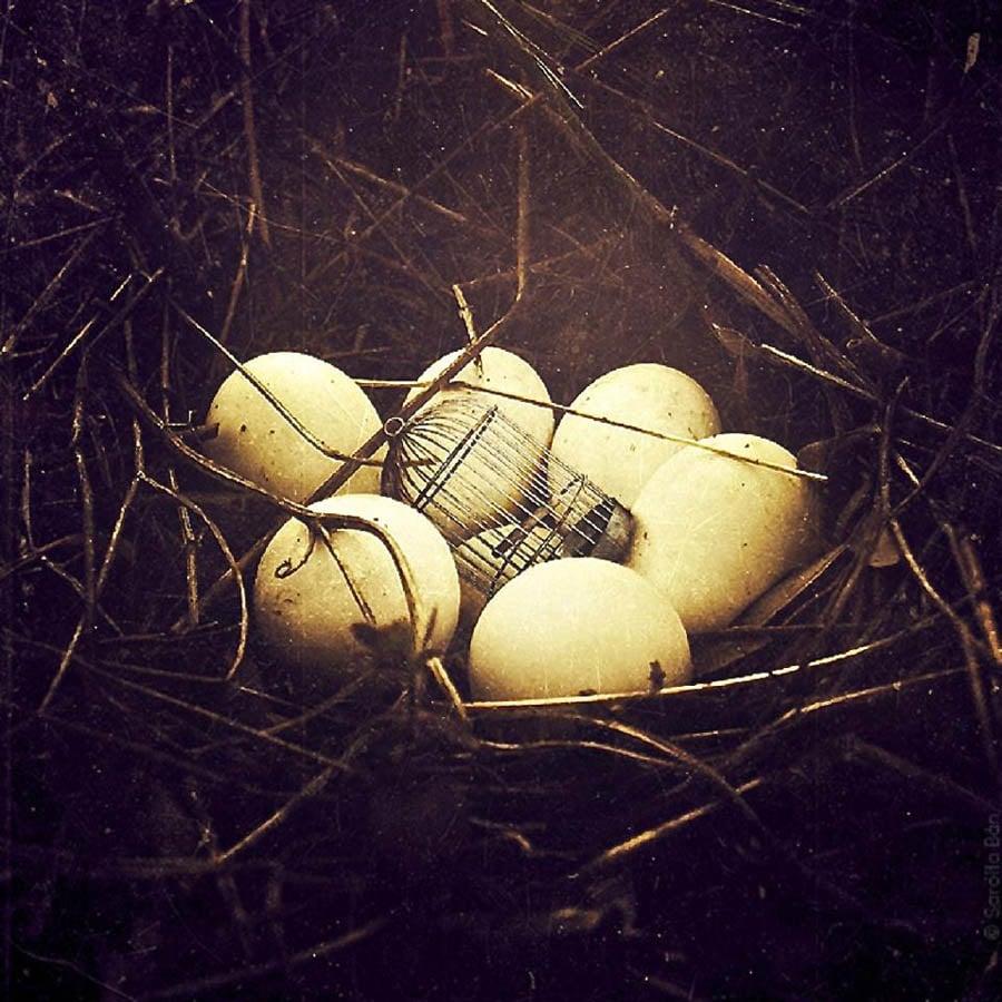 Sarolta Ban Eggs Cage