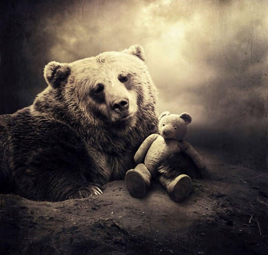 Sarolta Ban Teddy Bear