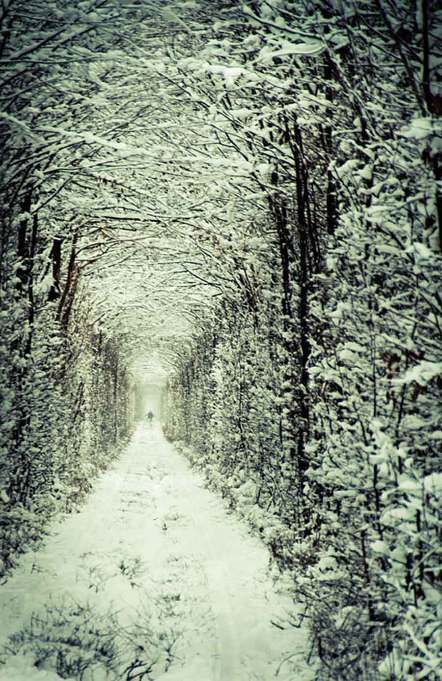 Tunnel Of Love Winter