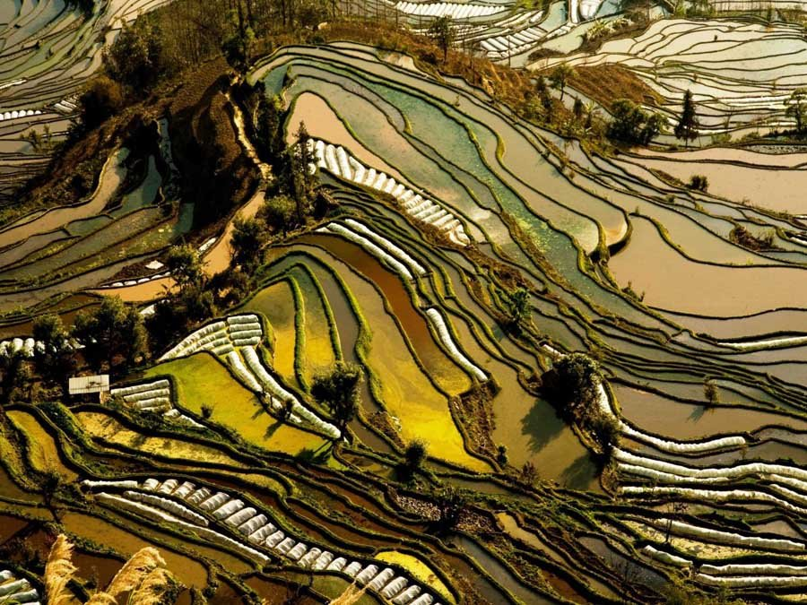 Yunnan Rice Terraces