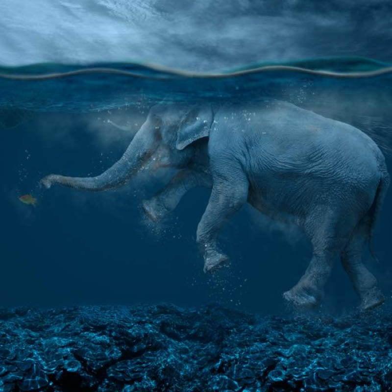 Caras Ionut Elephant Water