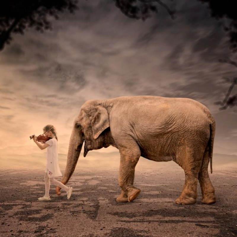 Ionut Elephant