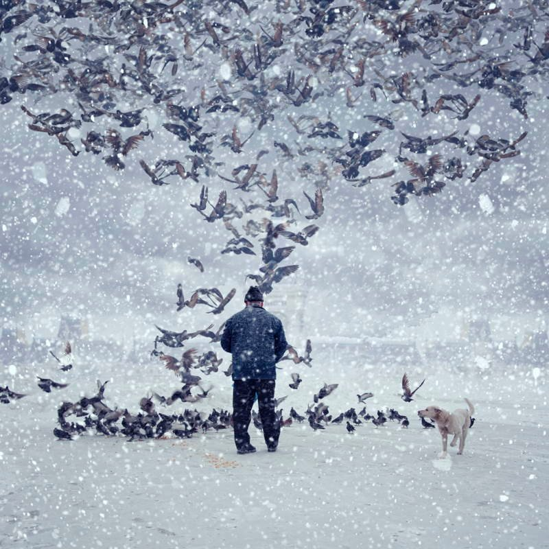 Man With Birds