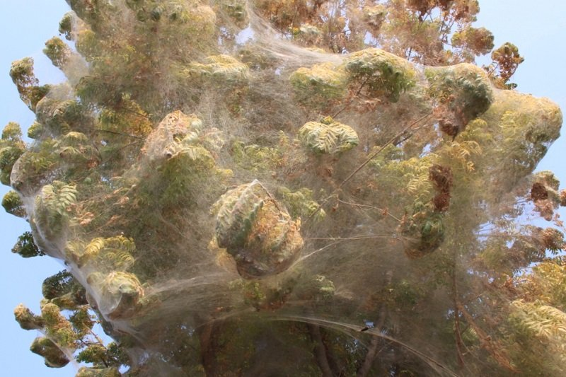 Close Up of Cocooned Trees