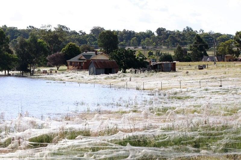Cocooned Field in Wagga Wagga