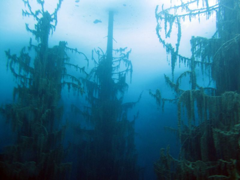 Underwater Tree Limbs