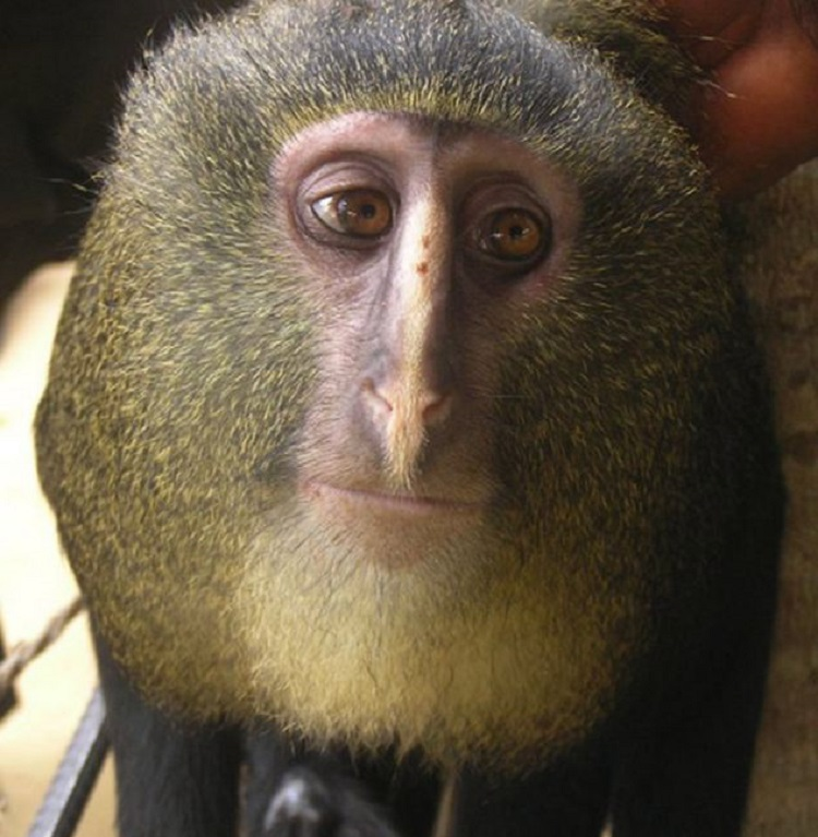 New Species Monkey