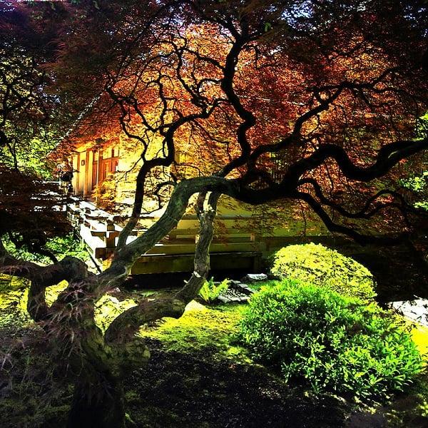 Evening at Portland's Japanese Gardens