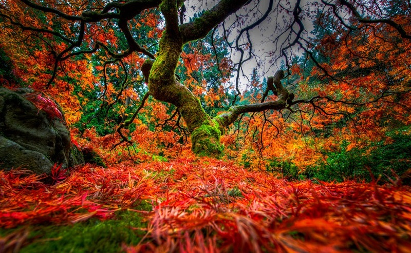 Colorful Japanese Gardens