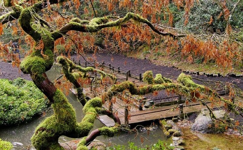 Portland's Japanese Gardens