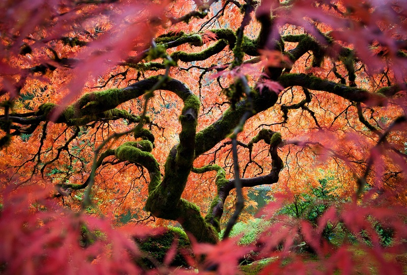 Portland's Japanese Gardens in National Geographic