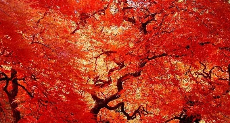 Portland's Trees in Fall