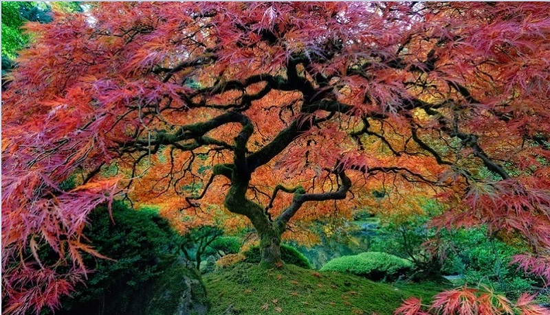 Beautiful Japanese Gardens in Portland