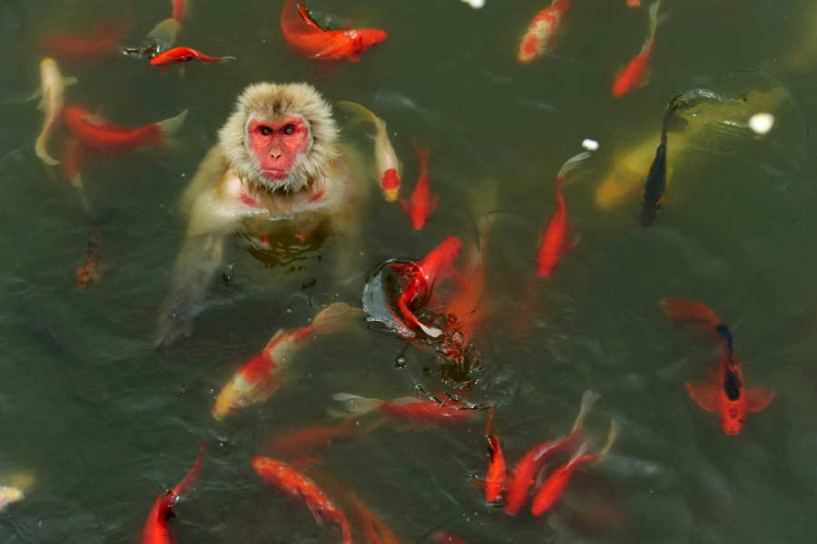 Monkey With Fish