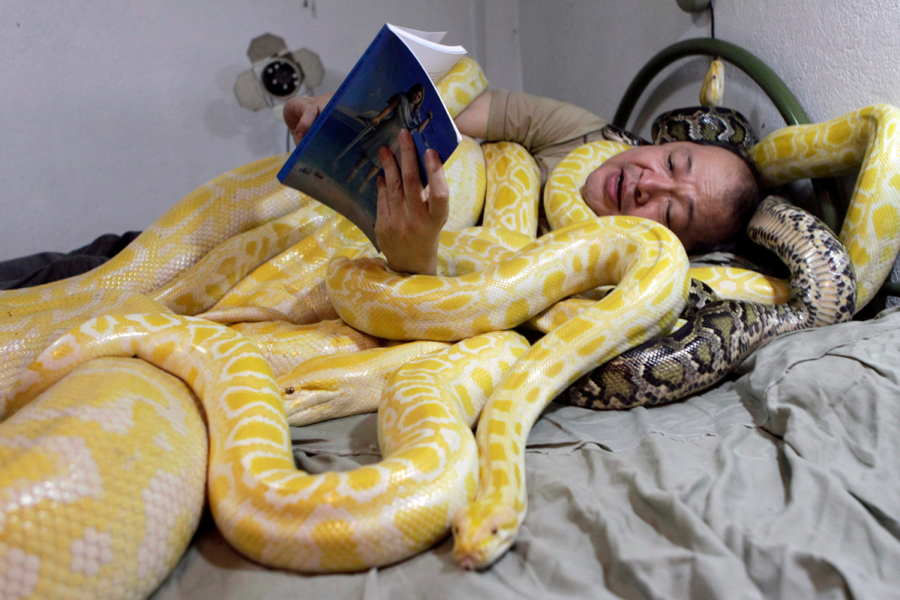 Snakes In Bed