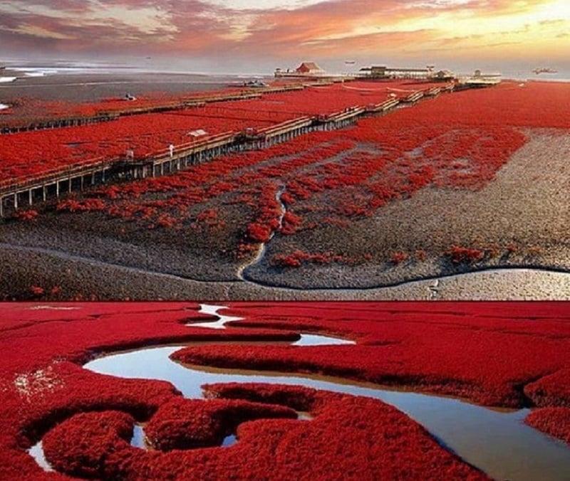 Красный пляж Паньцзинь, Китай