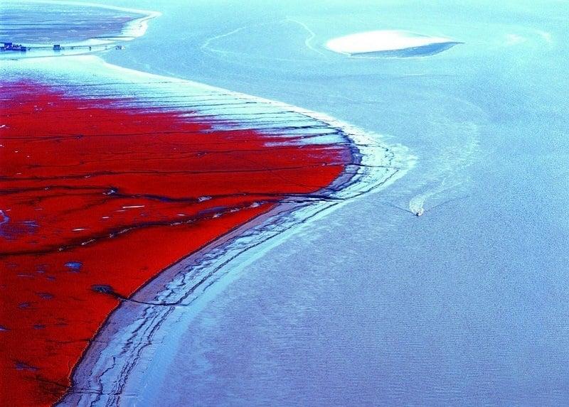 Сюрреалистично местами Красный пляж в Китае